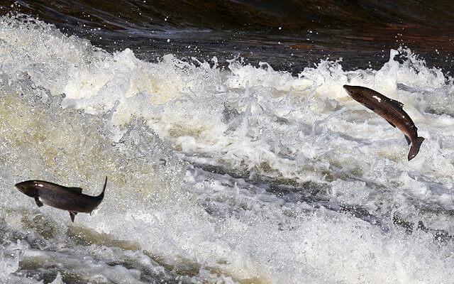 Salt Regulation In Freshwater And Seawater Fishes Blogionik